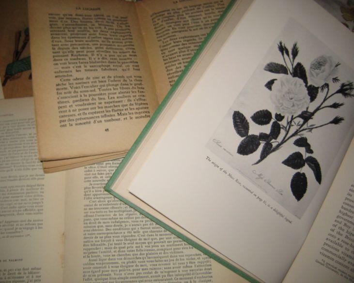 Book_wall_003