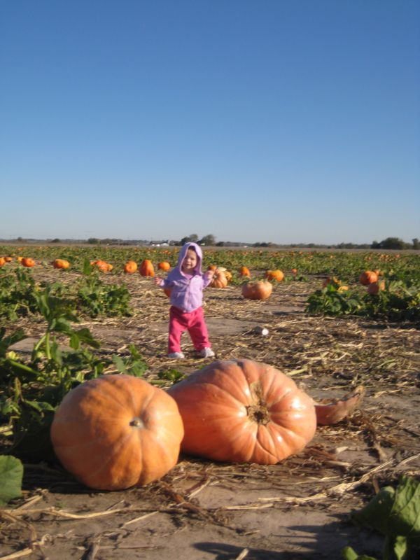Pumpkin_patch_007_2