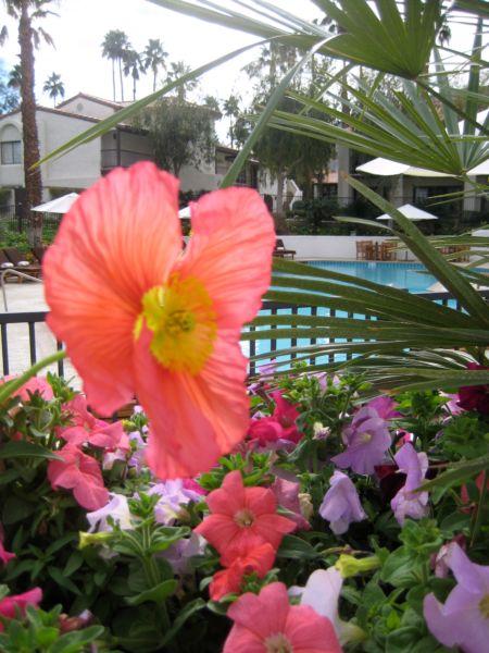 Trip_to_palm_springs_029