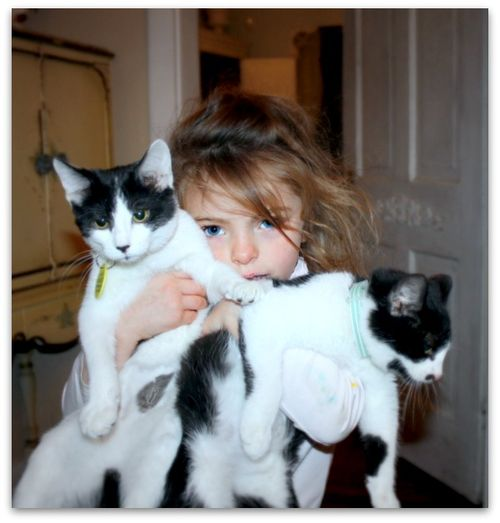 With the kitties